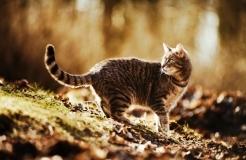 Deadmau5 Hits Back in Trademark Cat Fight