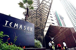 Temasek Rice Ready To Take On Global Market After Grant of Plant Varieties Protection